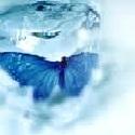 FrozenxButterfly