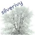 silverivy