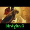 birdyluv