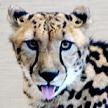 CatCreature