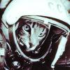 kittycosmonaut