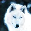 articwolfgirl
