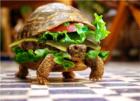 turtleboy777