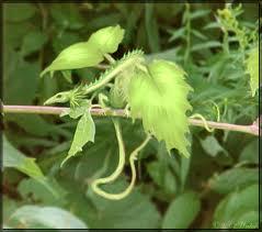 leaf0701