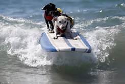 2surfdog.jpg