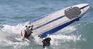 surfdog8.jpg