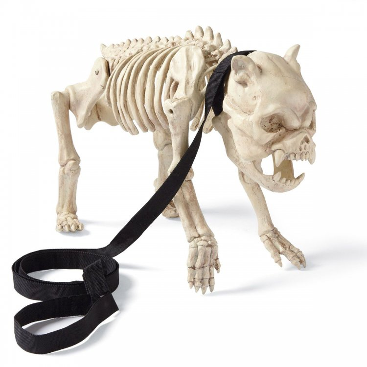 skeleton-dog-on-leash-1.jpg