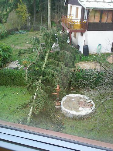 tree-1.jpg.883f191c18d55054c064cf1570552333.jpg