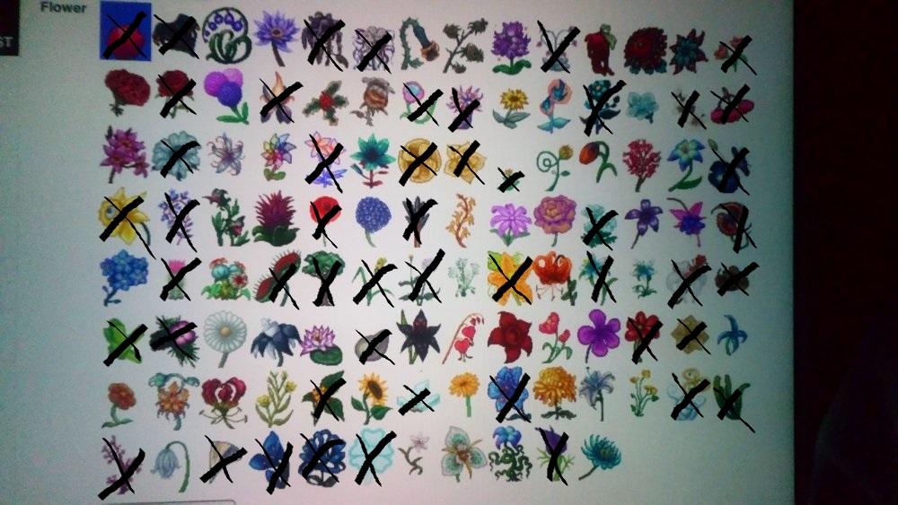 DC flowerss.JPG