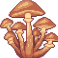 honeymushroom