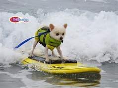 5surfdog.jpg