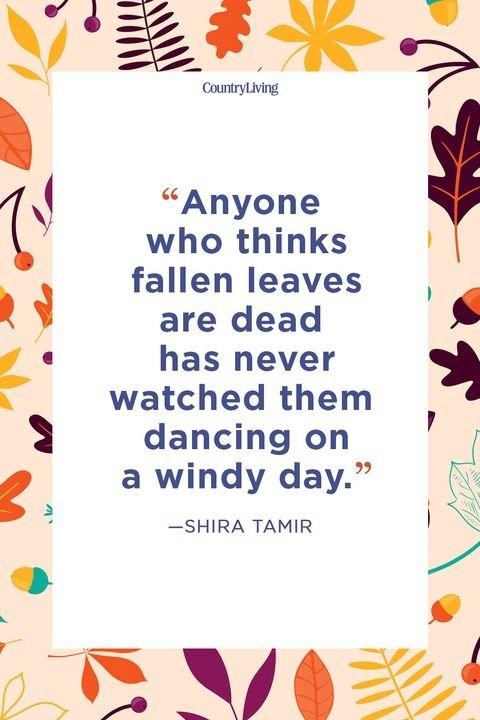 OCTOBER !!    Fall-quote-shira-tamir-1529344437.jpg.8af99a9409ec19e77d411c3af8b82b63