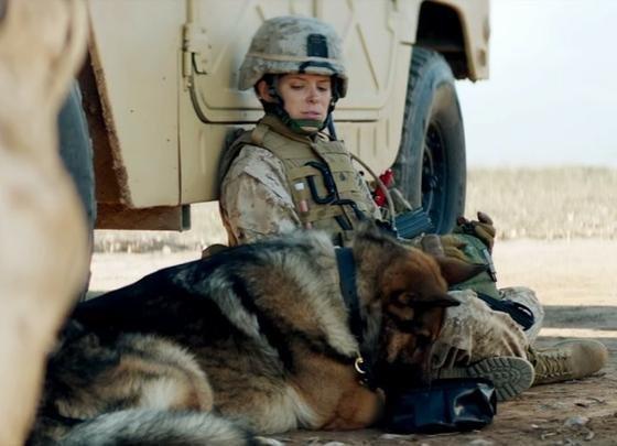 combat dog.jpg
