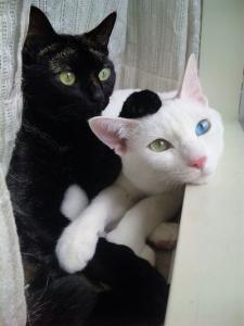 pretty cats.jpg