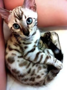 pretty kitty.jpg