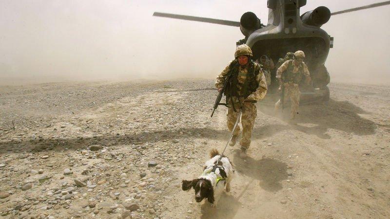 bomb dog Srpinger deployed with unit.jpg