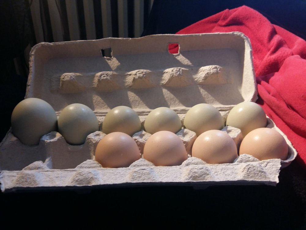 big egg.jpg